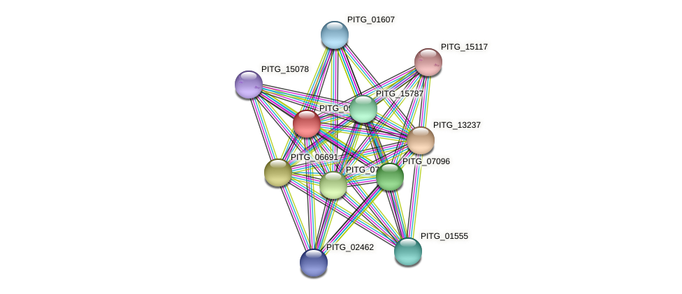 PITG_09986 protein (Phytophthora infestans) - STRING interaction network