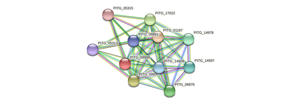 PITG_09990 protein (Phytophthora infestans) - STRING interaction network
