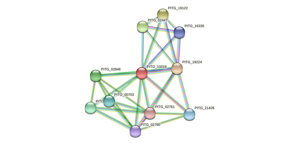 PITG_10016 protein (Phytophthora infestans) - STRING interaction network