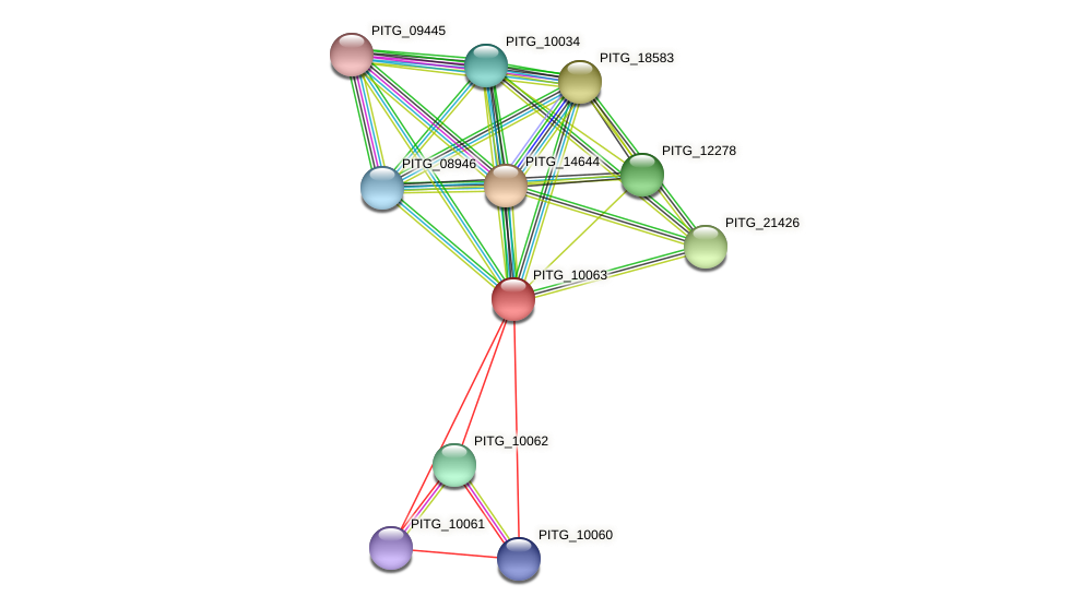 PITG_10063 protein (Phytophthora infestans) - STRING interaction network