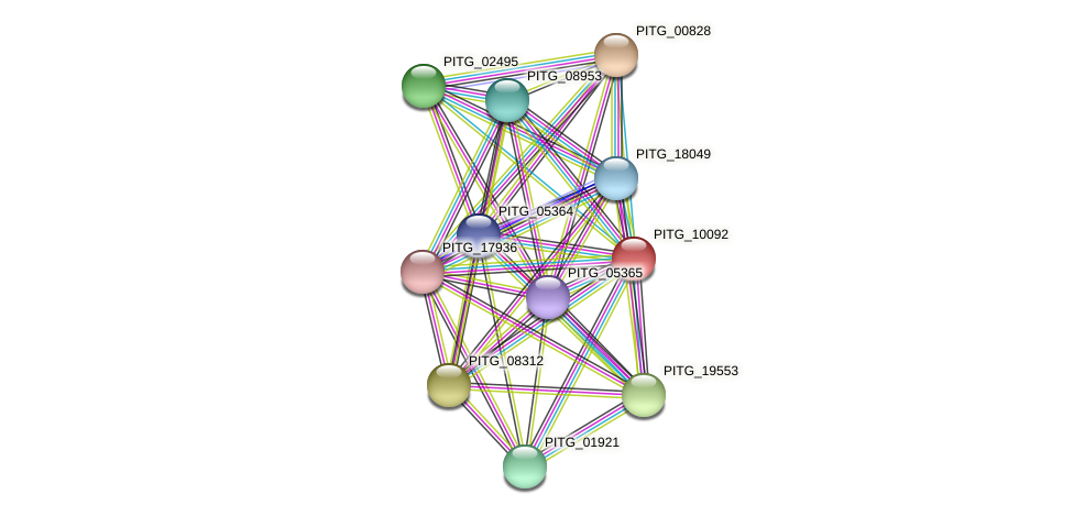 PITG_10092 protein (Phytophthora infestans) - STRING interaction network