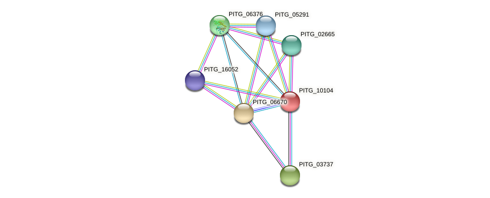 PITG_10104 protein (Phytophthora infestans) - STRING interaction network