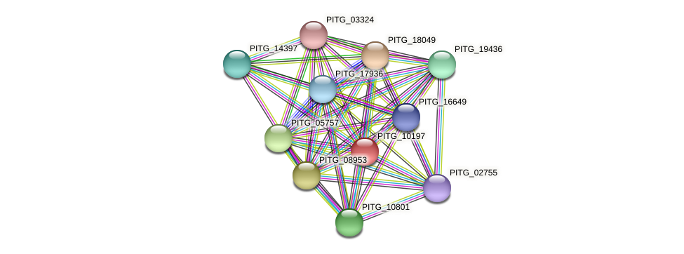 PITG_10197 protein (Phytophthora infestans) - STRING interaction network