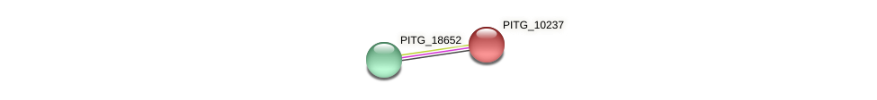 PITG_10237 protein (Phytophthora infestans) - STRING interaction network