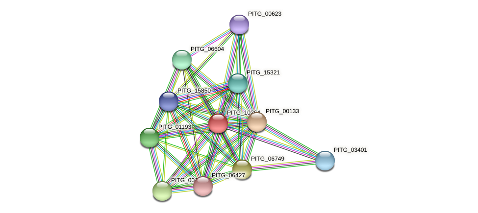 PITG_10264 protein (Phytophthora infestans) - STRING interaction network