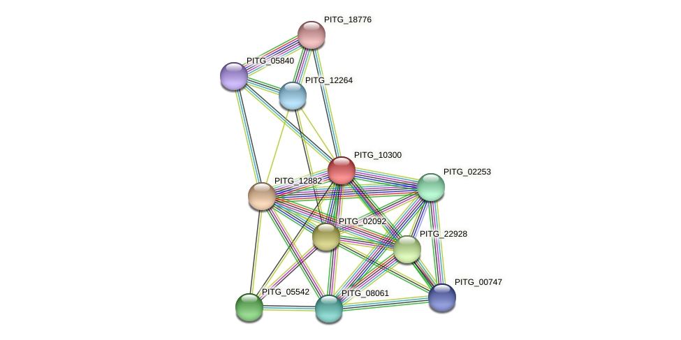 PITG_10300 protein (Phytophthora infestans) - STRING interaction network