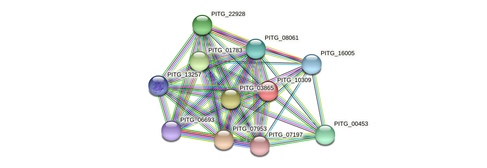 PITG_10309 protein (Phytophthora infestans) - STRING interaction network