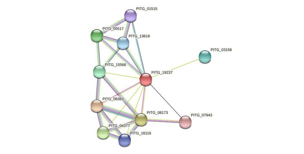 PITG_10333 protein (Phytophthora infestans) - STRING interaction network