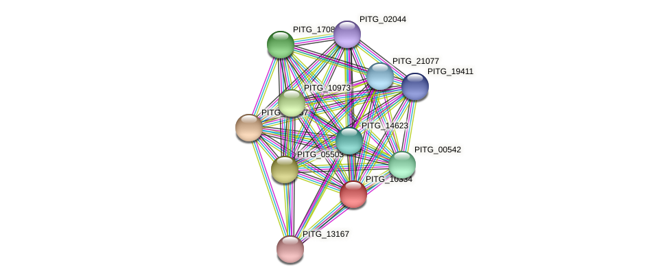 PITG_10334 protein (Phytophthora infestans) - STRING interaction network