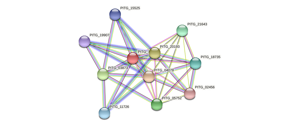 PITG_10345 protein (Phytophthora infestans) - STRING interaction network