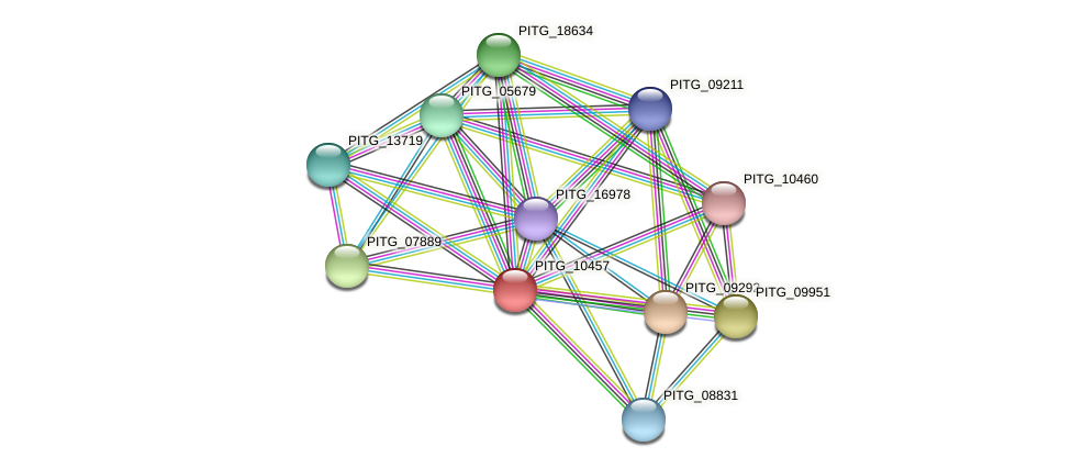 PITG_10457 protein (Phytophthora infestans) - STRING interaction network