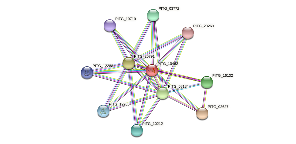 PITG_10462 protein (Phytophthora infestans) - STRING interaction network