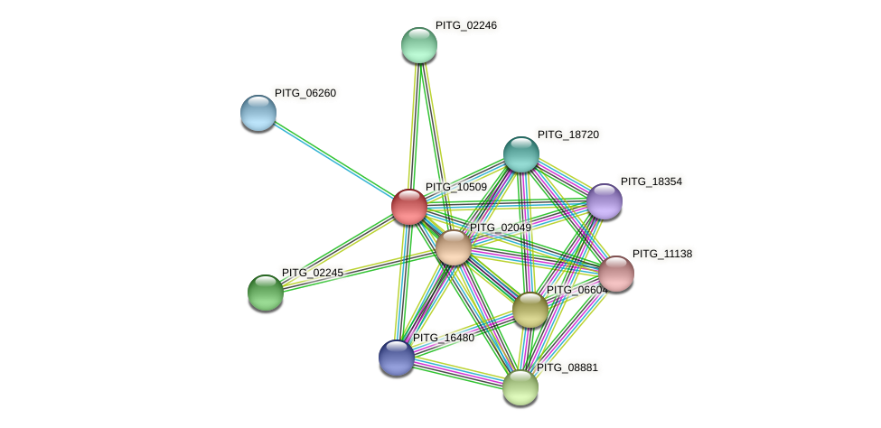 PITG_10509 protein (Phytophthora infestans) - STRING interaction network