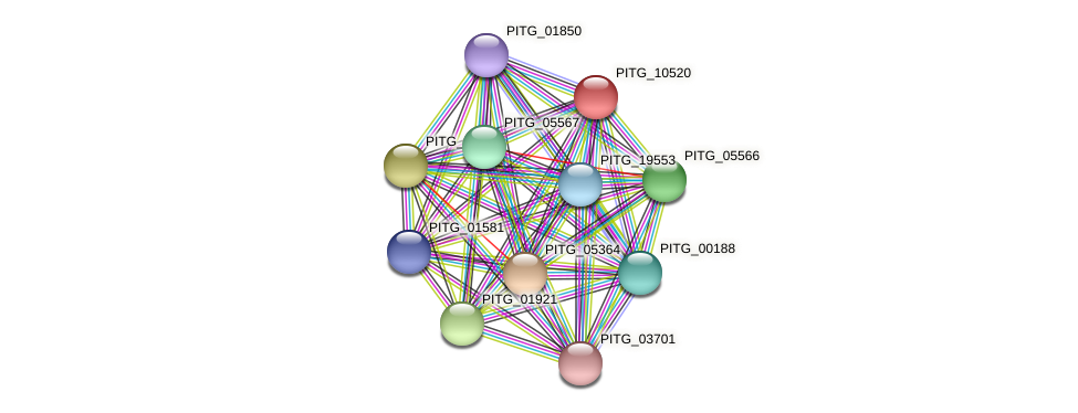 PITG_10520 protein (Phytophthora infestans) - STRING interaction network