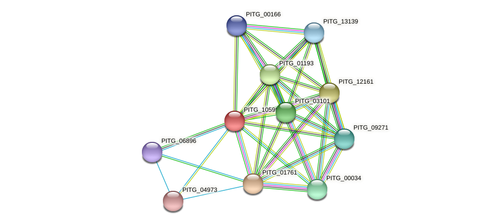 PITG_10595 protein (Phytophthora infestans) - STRING interaction network