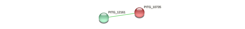 PITG_10735 protein (Phytophthora infestans) - STRING interaction network
