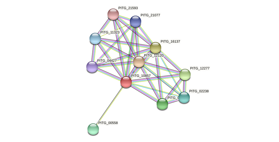 PITG_10857 protein (Phytophthora infestans) - STRING interaction network