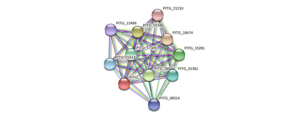 PITG_10864 protein (Phytophthora infestans) - STRING interaction network