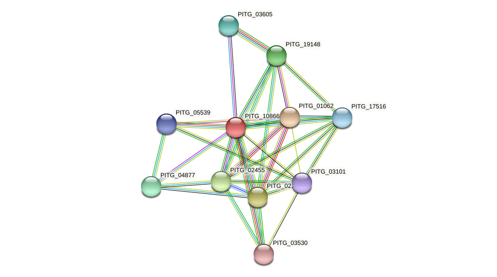 PITG_10866 protein (Phytophthora infestans) - STRING interaction network