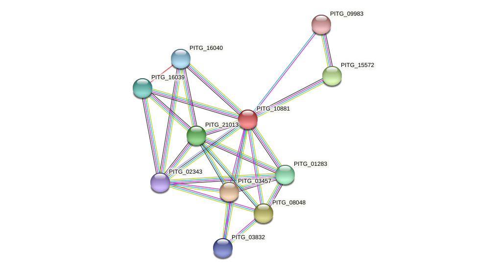 PITG_10881 protein (Phytophthora infestans) - STRING interaction network