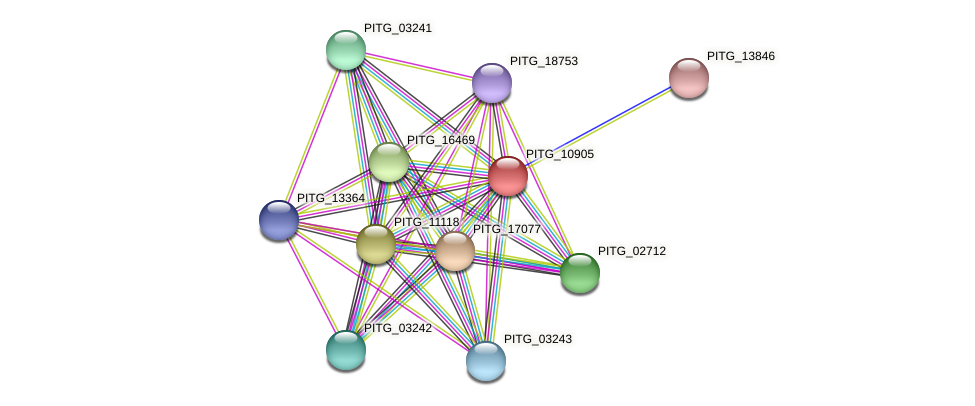 PITG_10905 protein (Phytophthora infestans) - STRING interaction network