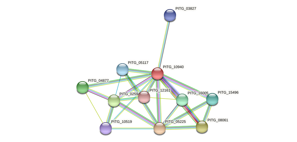 PITG_10940 protein (Phytophthora infestans) - STRING interaction network