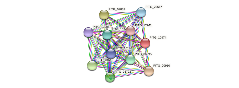 PITG_10974 protein (Phytophthora infestans) - STRING interaction network