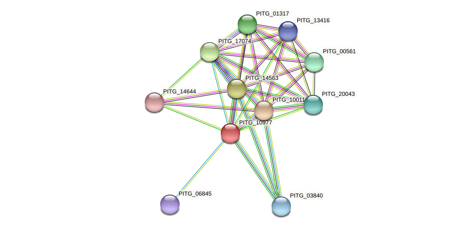 PITG_10977 protein (Phytophthora infestans) - STRING interaction network
