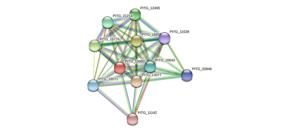 PITG_10990 protein (Phytophthora infestans) - STRING interaction network
