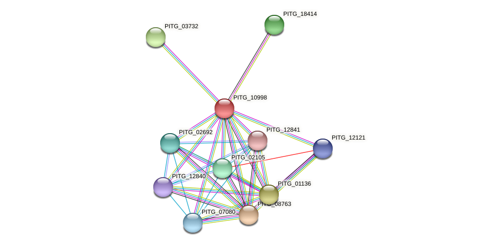 PITG_10998 protein (Phytophthora infestans) - STRING interaction network