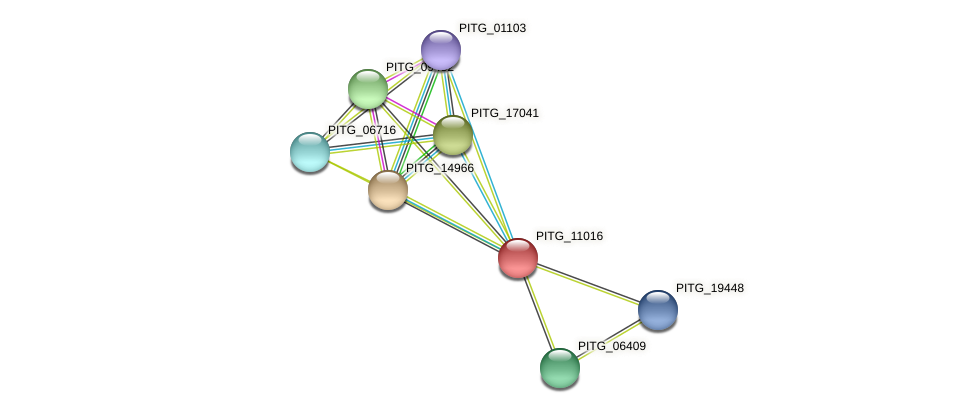 PITG_11016 protein (Phytophthora infestans) - STRING interaction network