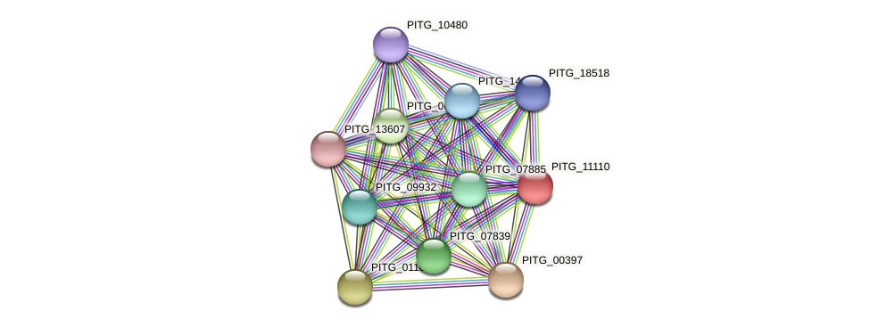 PITG_11110 protein (Phytophthora infestans) - STRING interaction network