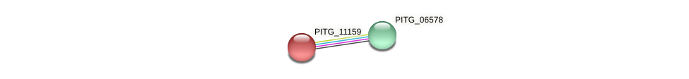 PITG_11159 protein (Phytophthora infestans) - STRING interaction network