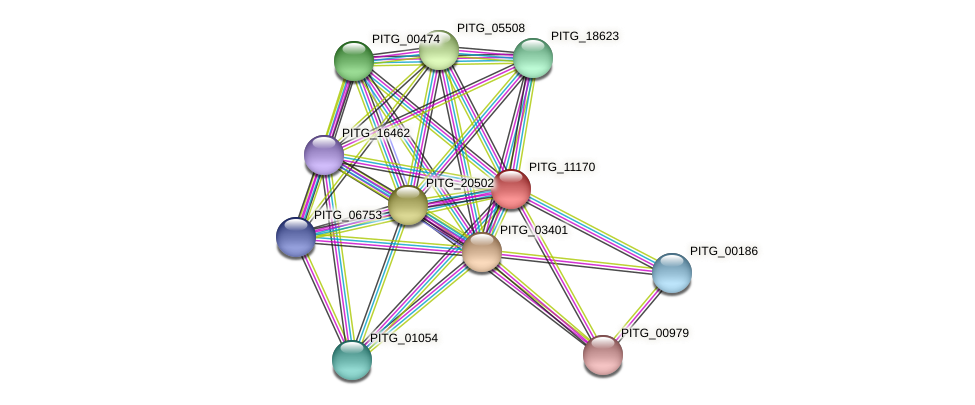 PITG_11170 protein (Phytophthora infestans) - STRING interaction network