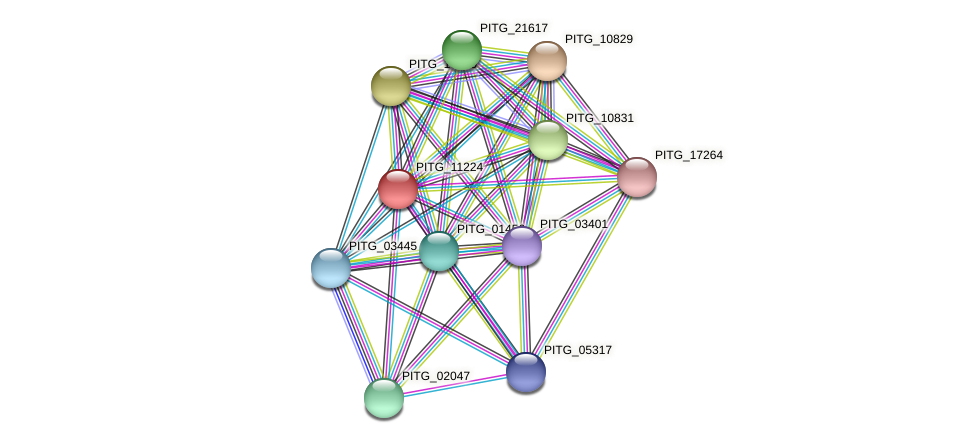 PITG_11224 protein (Phytophthora infestans) - STRING interaction network