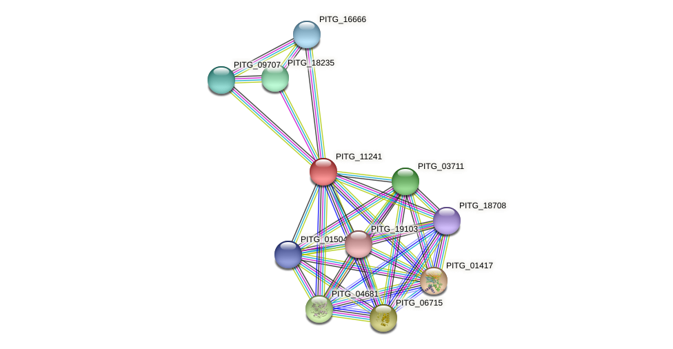 PITG_11241 protein (Phytophthora infestans) - STRING interaction network