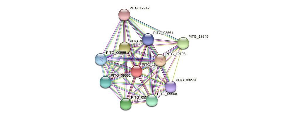 PITG_11304 protein (Phytophthora infestans) - STRING interaction network