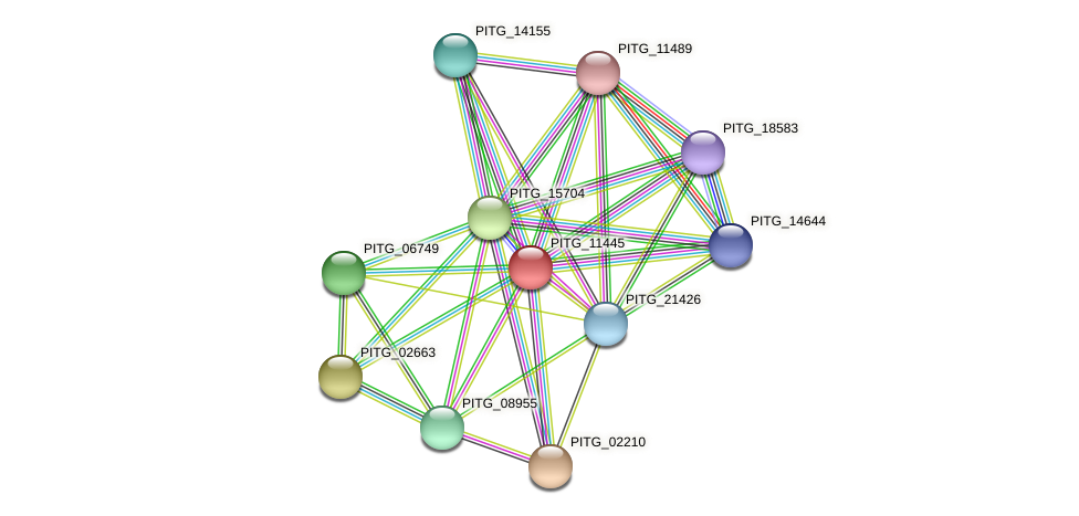 PITG_11445 protein (Phytophthora infestans) - STRING interaction network
