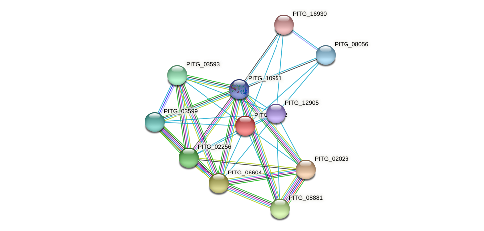 PITG_11452 protein (Phytophthora infestans) - STRING interaction network