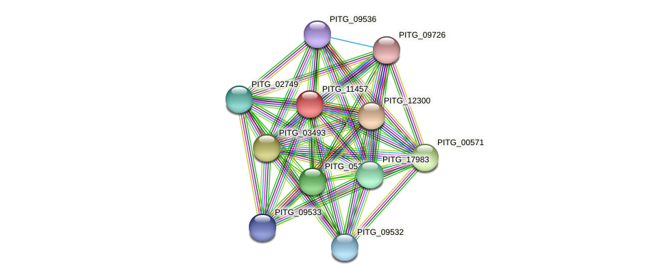 PITG_11457 protein (Phytophthora infestans) - STRING interaction network