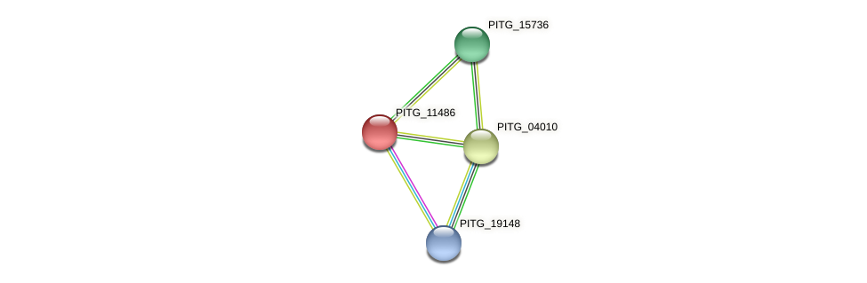 PITG_11486 protein (Phytophthora infestans) - STRING interaction network