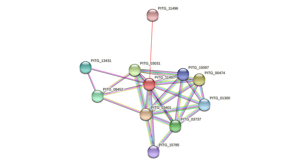 PITG_11497 protein (Phytophthora infestans) - STRING interaction network