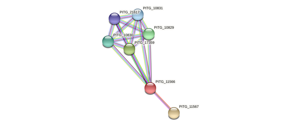 PITG_11566 protein (Phytophthora infestans) - STRING interaction network