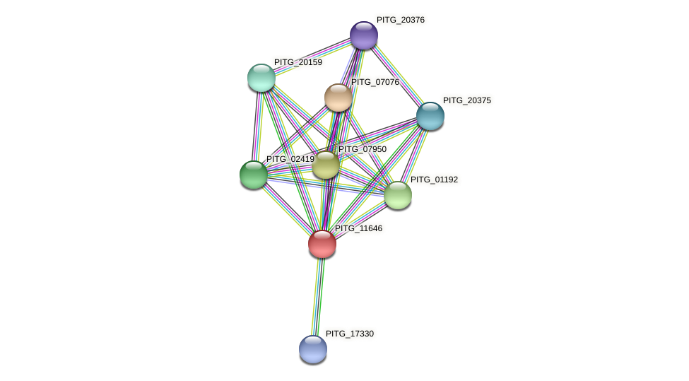 PITG_11646 protein (Phytophthora infestans) - STRING interaction network