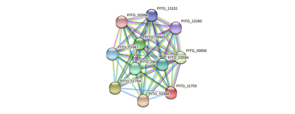 PITG_11703 protein (Phytophthora infestans) - STRING interaction network