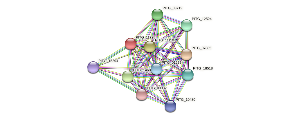 PITG_11728 protein (Phytophthora infestans) - STRING interaction network