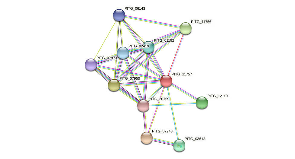 PITG_11757 protein (Phytophthora infestans) - STRING interaction network