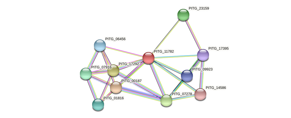 PITG_11782 protein (Phytophthora infestans) - STRING interaction network