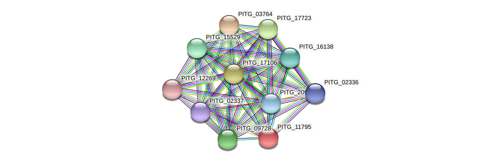 PITG_11795 protein (Phytophthora infestans) - STRING interaction network