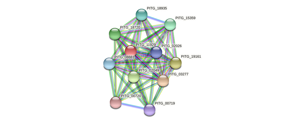 PITG_11929 protein (Phytophthora infestans) - STRING interaction network